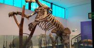 Megateri - Museu de Ciències Naturals de València